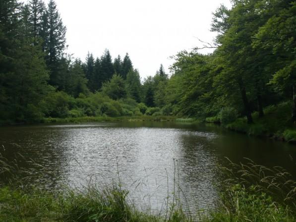 Les étangs de Fontbruno