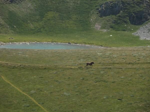 Un hennissement retenti. Et voilà le cheval parti pour grimper et passer de l'autre côté du sommet.