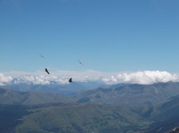 Les vautours étaient nombreux.