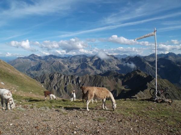 Décor superbe pour le vélo. Les lamas arrivent.