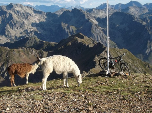 Il ne s'est pas ennuyé dans ce décor et avec les lamas comme compagnie.