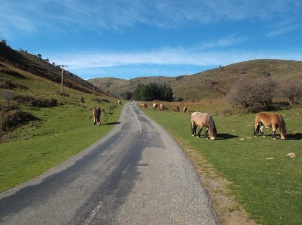 Sur le petit plateau après le col de Lecharria et avant que la route ne remonte vers Ahusquy.