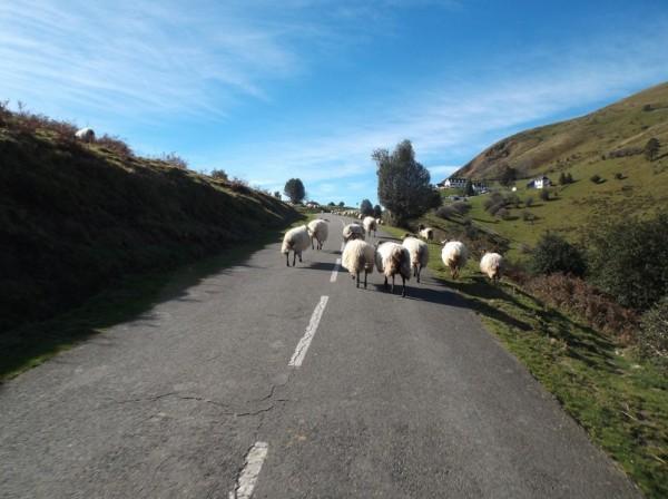 Y a du monde sur les routes basques !