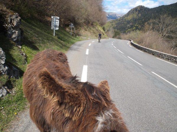 Cyrille en approche en caméra embarqué depuis le point de vue de l'âne (une caméra embarquée d'âne quoi)