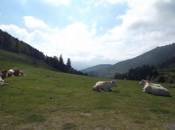 Vue sur le Pic du Midi, voilé par les nuages.