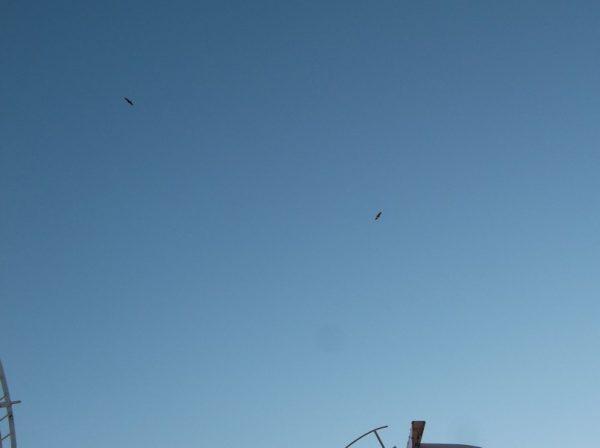 Les 2 vautours.